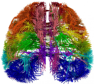 Image from the Mouse Brain Atlas